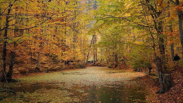 Autumn, Lake, Nature, Landscape, Forest, Trees, Tree