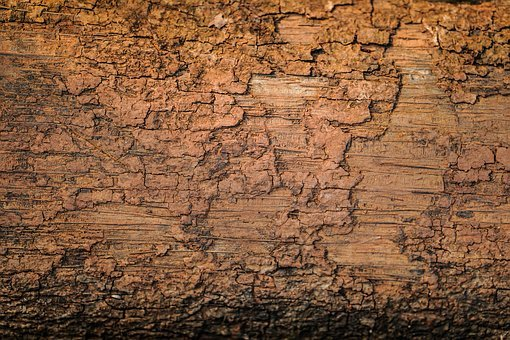Plant Bark, Textured, Full Frame, Tree, Wood - Material
