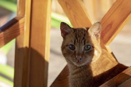 Cat, Yellow, Brown, Wood, Friend, Animal, Cute, Eye