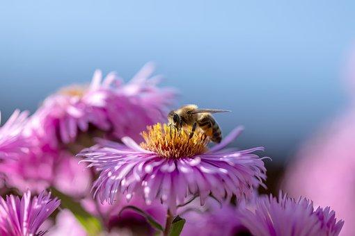 Bee, Flower, Honey Bee, Bright, Animal World, Yellow