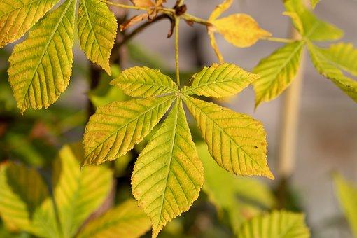 Autumn Leaf, Leaf, Tree, Autumn, Fall Color, Colorful