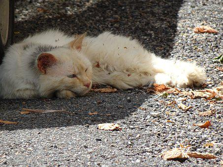 Cat, Sprawled, Tired, Felines, Street, Autumn Leaves