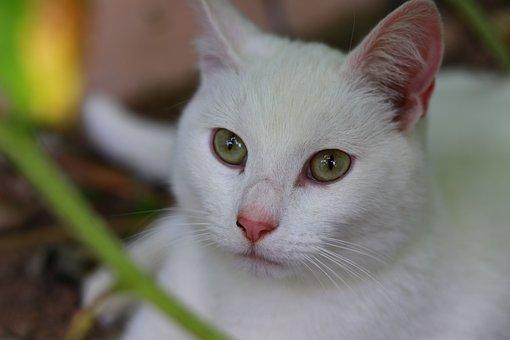 Cute, Cat, Pet, Feline, Animal, Kitty, Adorable