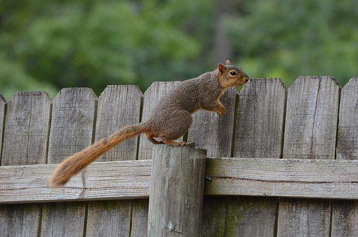 Squirrel, Rodent, Animal, Cute, Nature, Wildlife, Furry