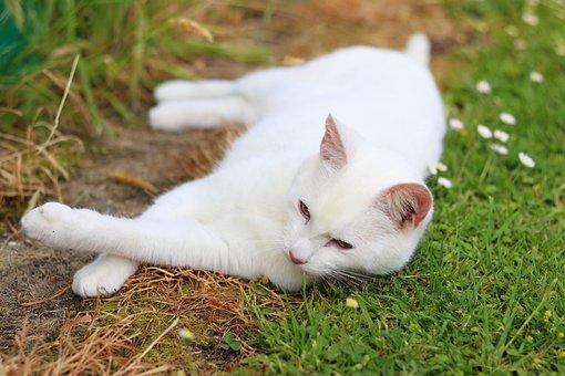 Cute, Cat, Pet, Feline, Kitty, Adorable, Domestic