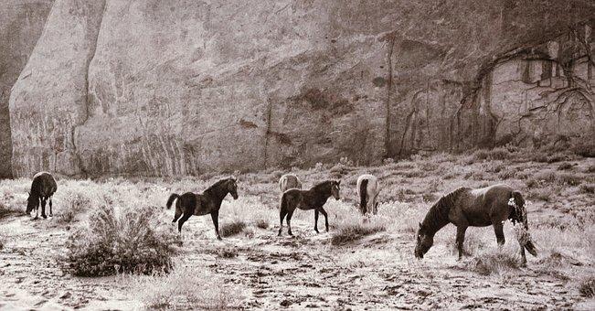 Horses, Animals, Nature, Equine, Equestrian, Riding