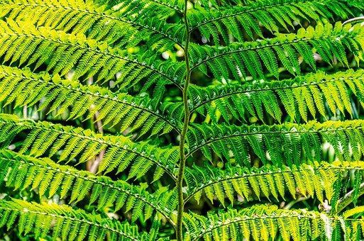Fern, Green, Pattern, Plant, Leaf, Nature, Texture