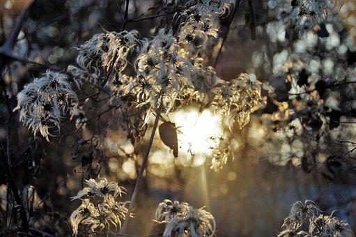 Shine Through, Sun, Flowering, Climbing, Tufts, Flowers