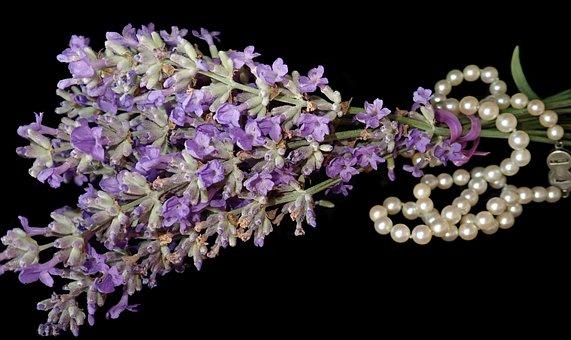 Lavender, Flowers, Fragrance, Garden, Nature, Pearls