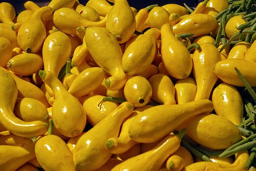 Yellow Squash, Yellow, Crookneck, Colorful, Harvest