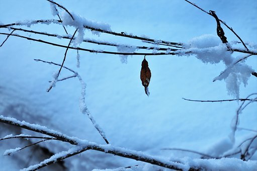 Snow, Last, Leaf, Winter, Cold, Frozen, White, Icy