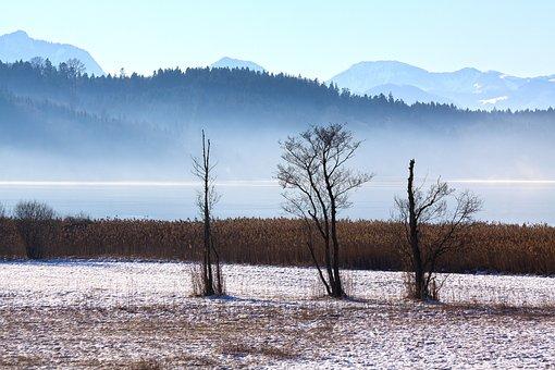 Landscape, Winter, Trees, Forest, Alpine, Hair Dryer