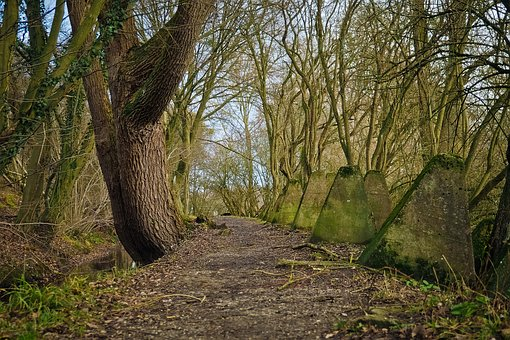Forest, Away, Nature, Forest Path, Trees, Landscape