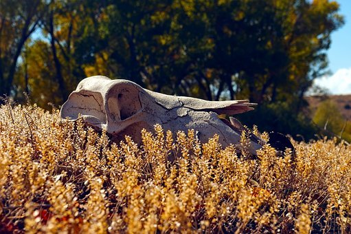 Horse Skull On Bannack Roof, Bannack, Montana, Historic