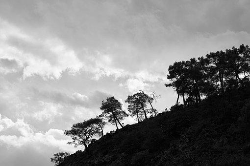 Tree, Trees, Mountain, Taylor, Landscape