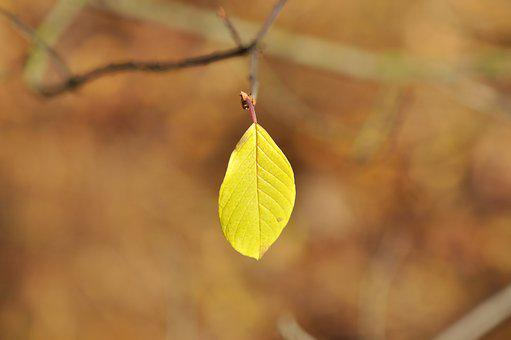 Sheet, Leaves, Autumn, Nature, Fall Colors, Forest