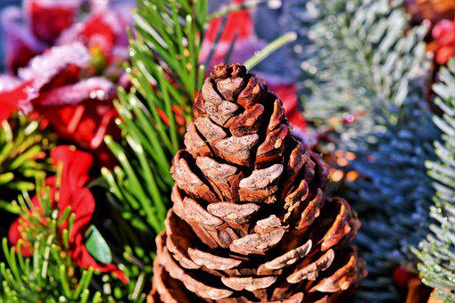 Pine Cones, Tap, Conifer, Decoration, Pine, Nature