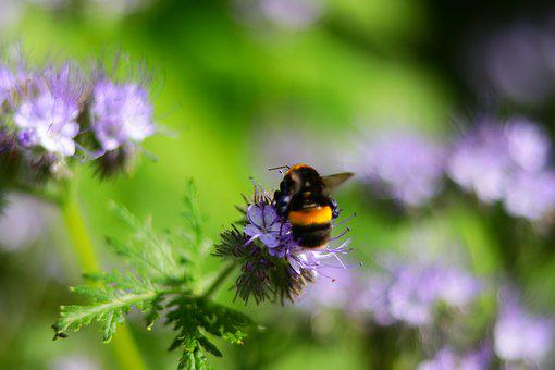 Bee, Nature, Colours, Honey, Insect, Nectar, Bloom