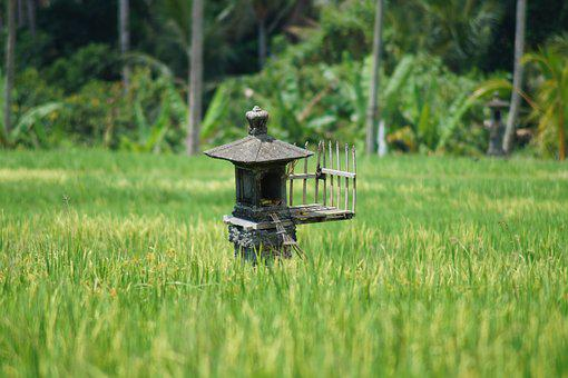 Rice, Paddy, Bali, Green, Agriculture, Rice Fields