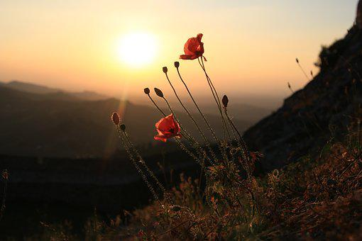 Marvão, Portugal, Poppy, Sunset, Landscape, Against Day