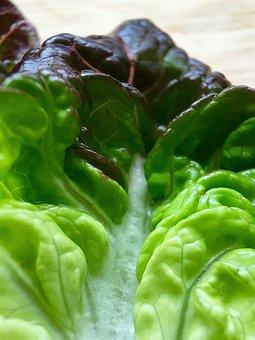 Red Gem Lettuce, Red Gem, Lettuce, Salad, Food, Leaf