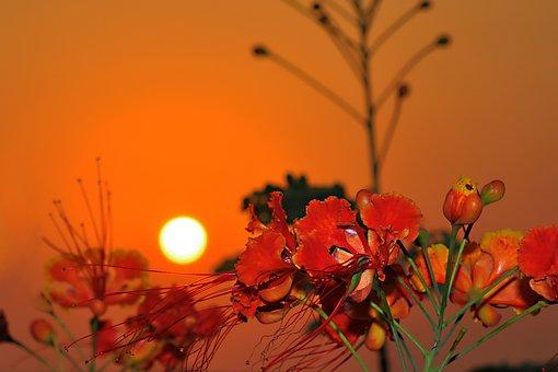 Red Sea, Sunset, Jeddah, Saudi Arabia, Sun, Sky, Nature