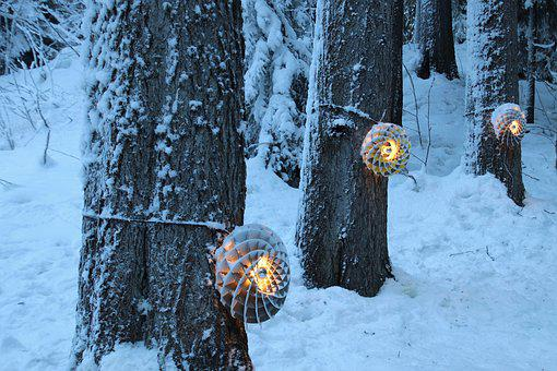 Light, Suspended, Snow, Cold, Frost, Tree, Frozen