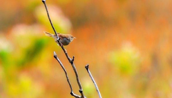 Bird, Sticks, Orange, Green, Stick, Nature, Beak