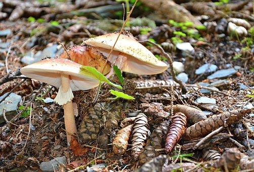 Nature, Svaneti, Georgia, Mushrooms, Outdoors, Caucasus