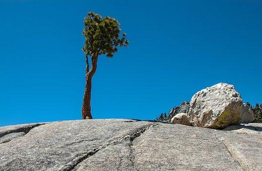 Trees, Rock, Scenic, Tioga Pass, Usa, Yosemite