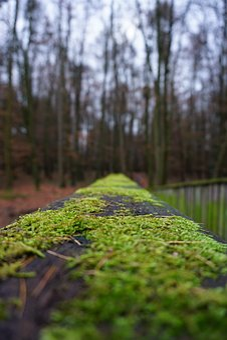 Bridge, Wood, Railing, Moss, Nature, Trees, Away