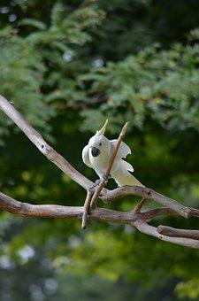 Bird, Cockatoo, Yellow, White, Parrot, Nature, Feather