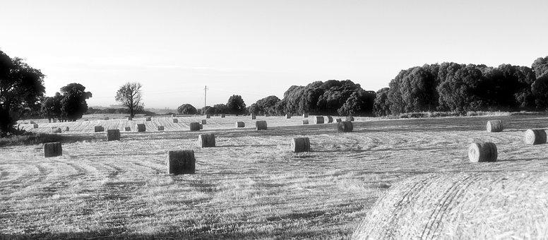 Hay Bale, Farm, Morning, Agriculture, Hay
