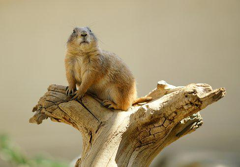 Squirrel, Animal, Nature, Nager, Wild, Rodents, Brown