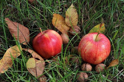 Apple, Apples, Foliage, Eco, Mature, Autumn, Garden