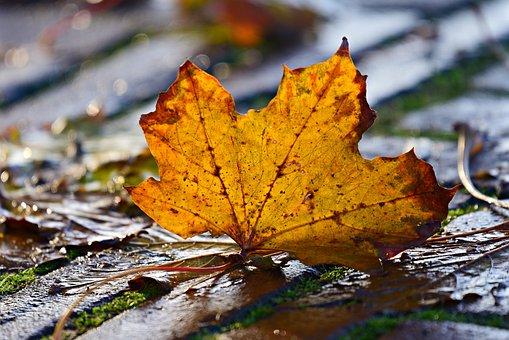 Autumn Leaf, Veins, Pattern, Fallen, Fall, Street