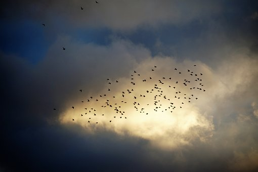 Birds, A Bevy Of, Covey, Silhouette, Heaven, Sky, Light