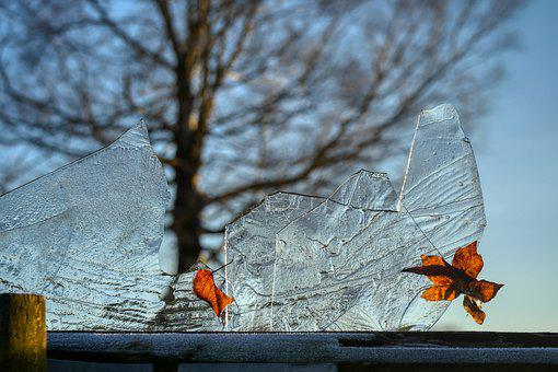 Ice, Leaf, Frozen, Tree, Transparent, Crystal, Clear