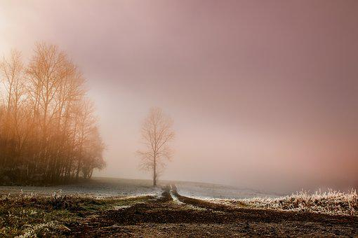 Fog, Dawn, Landscape, Sunrise, Nature, Trees, Structure