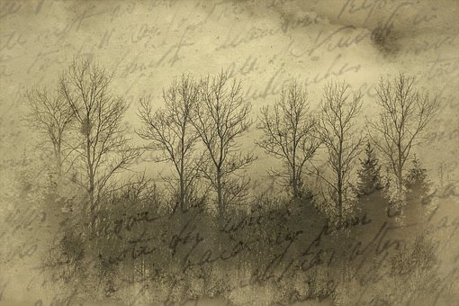 Historically, Old, Document, Photo, Vintage, Trees