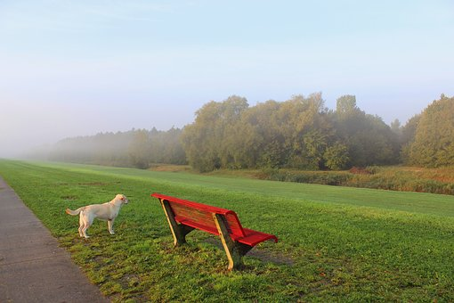 View, Foggy, Dyke, Bank, Dog, Forest, Reed, Nature