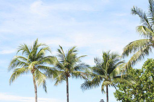 Palm Tree, Exotic, Says I, Tropical, Summer, Vacation