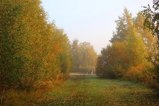 Sunrise, Foggy, Waterfront, Autumn, Morning, Landscape