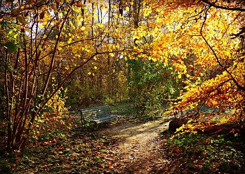 Lane, Bench, Park, Resting Place, Seat, Tree, Foliage