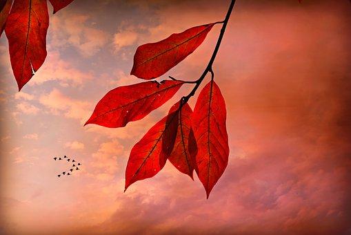Autumn Leaf, Vein, Pattern, Twig, Foliage, Colorful