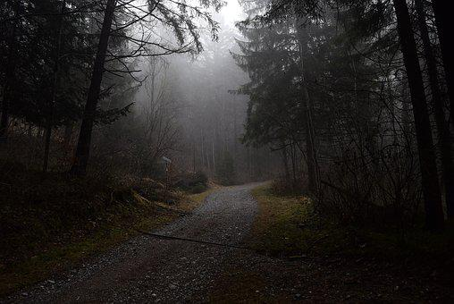Forest Path, Fog, Forest, Nature, Mysterious