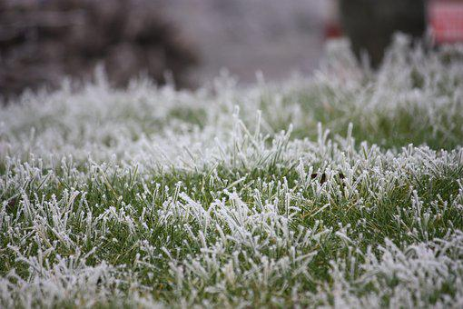 Frost, Grass, Prairie, Cold, Morning, Ice, Gel, Winter