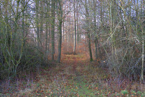 Forest, Tree, Away, Landscape, Path, Autumn, Nature