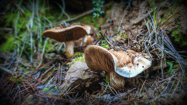 Mushrooms, Fungi, Autumn, Forest, Moss, Nature, Grass