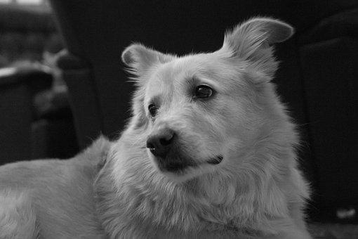 Pet, Friendship, Fur, Dear, Snout, Trust, Cute